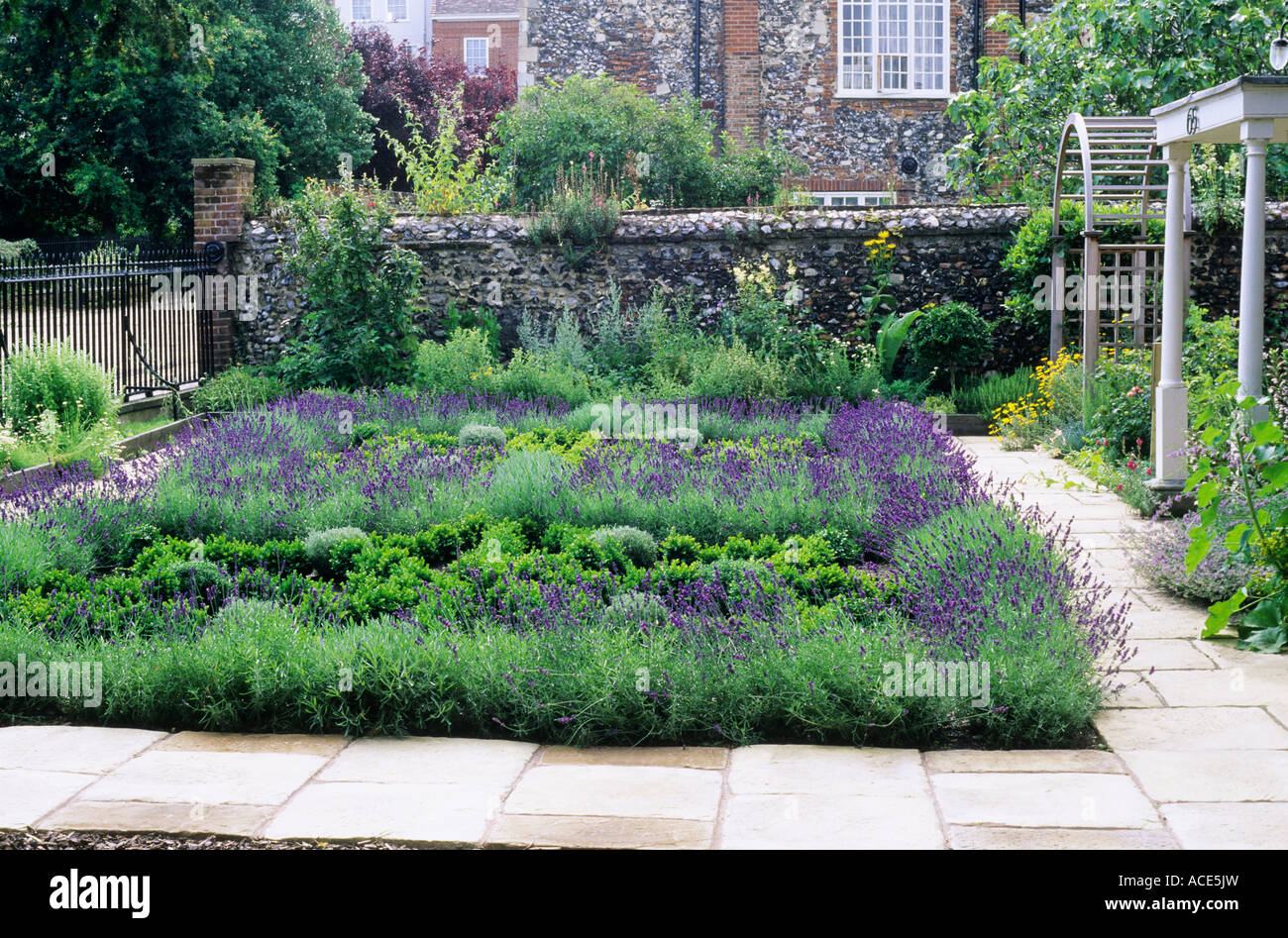 Herb knot front garden lavender box hedges stock photo for Herb knot garden designs