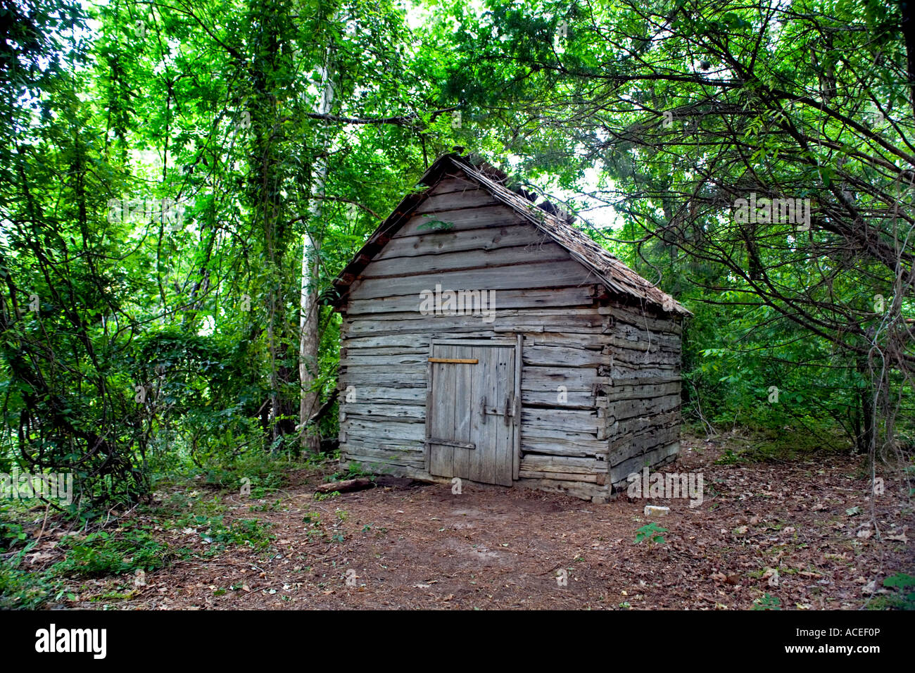 Cabin settler in thick tree stand log home under forest canopy & Cabin settler in thick tree stand log home under forest canopy ...
