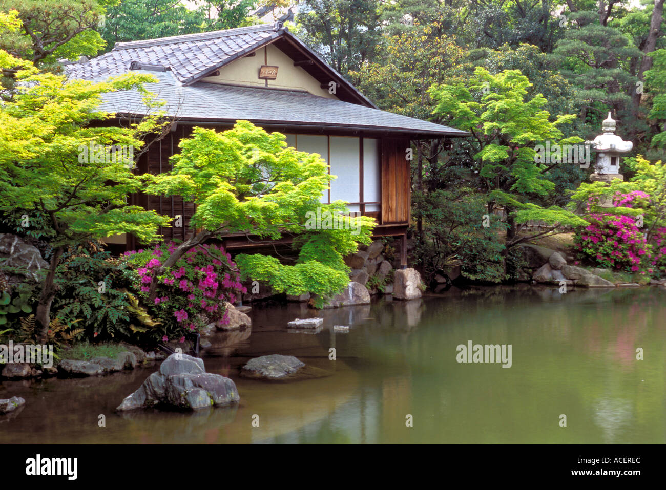 Tea house beside koi pond in spring setting at sorakuen for Koi pond in house