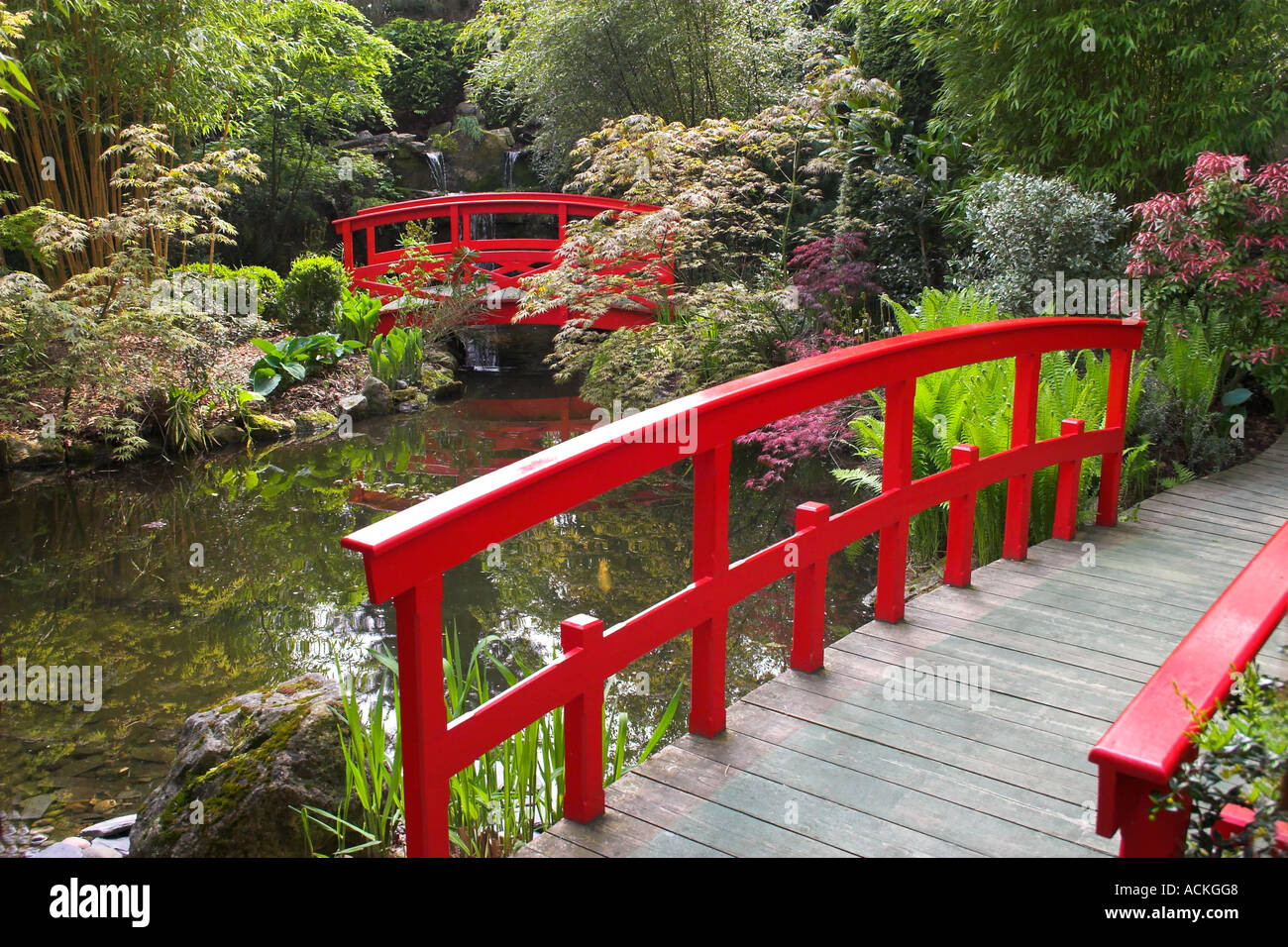 red bridges of japanese garden stapehill dorset uk - Red Japanese Garden Bridge