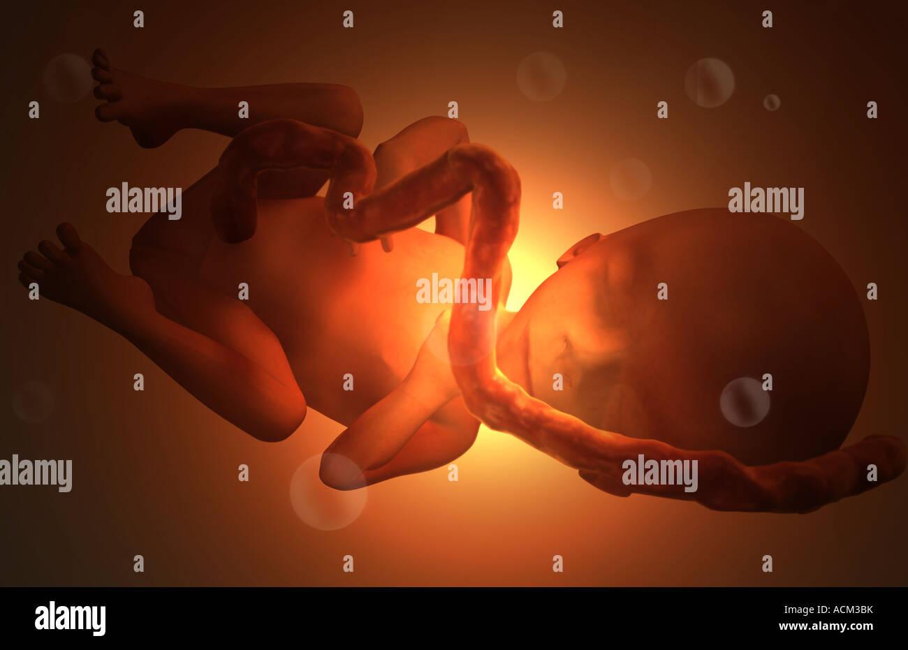 Фото половых органов мальчика и девочки 20 недель беременности 3