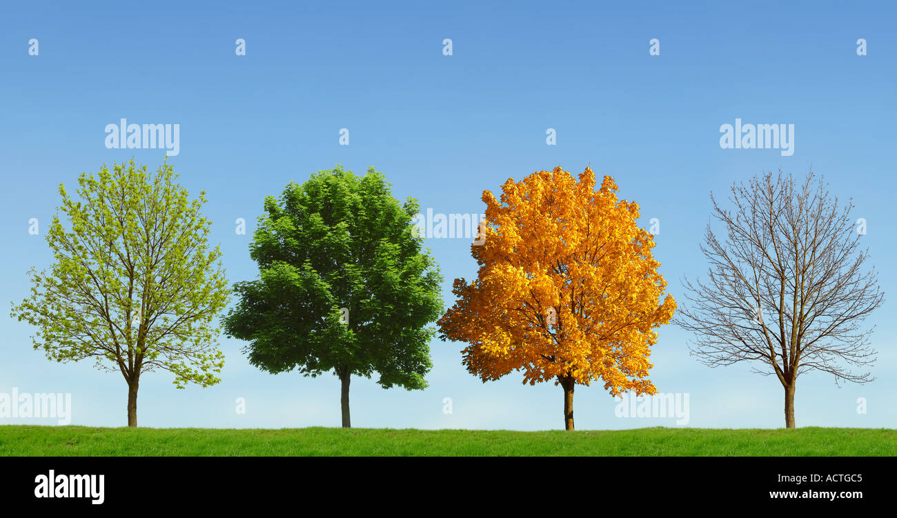 tree 4 seasons baum 4 jahreszeiten stockfoto lizenzfreies bild 4317380 alamy. Black Bedroom Furniture Sets. Home Design Ideas