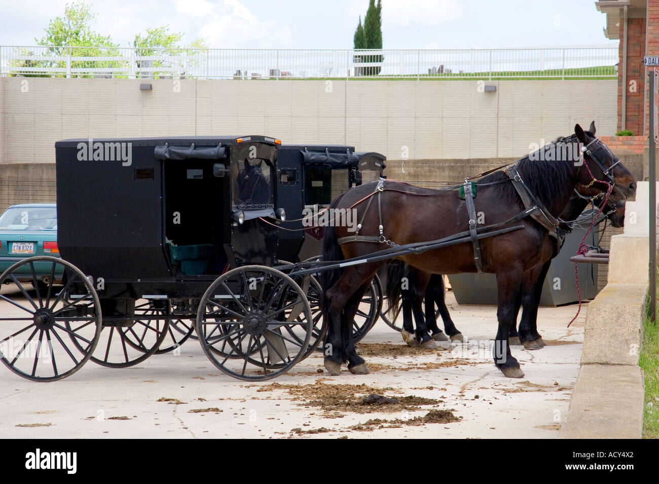Amish horse and buggy in a parking lot at berlin ohio stock image