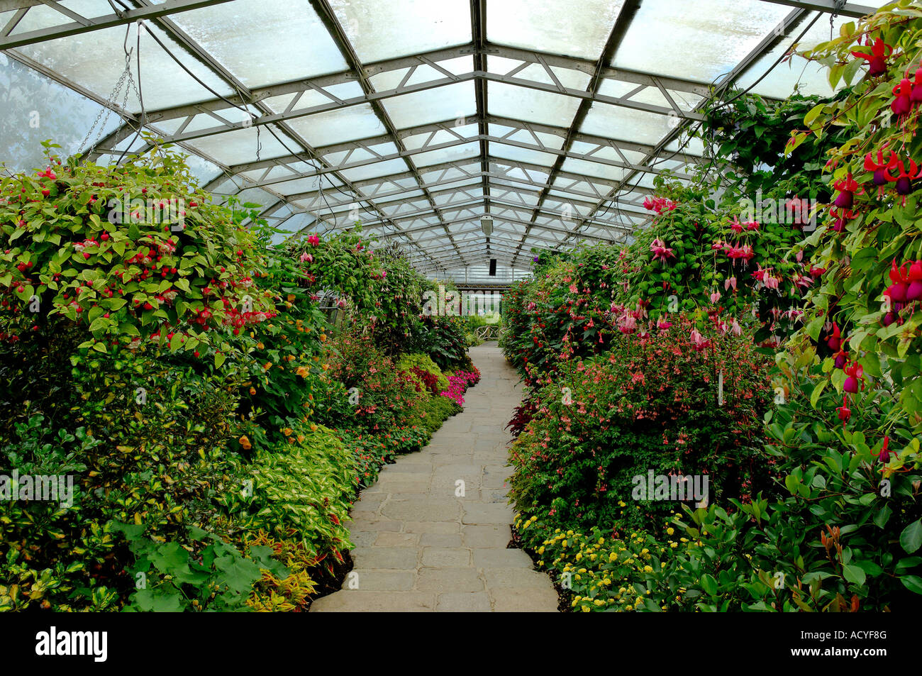 duthie park winter gardens aberdeen stock photo royalty free