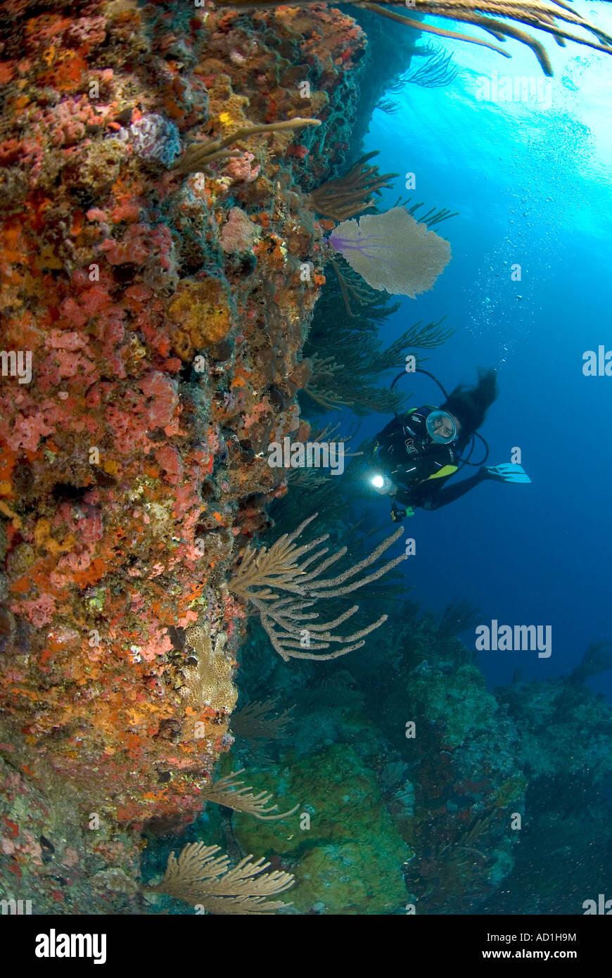 Diver In British Virgin Islands, Female Diver, Oval Mask