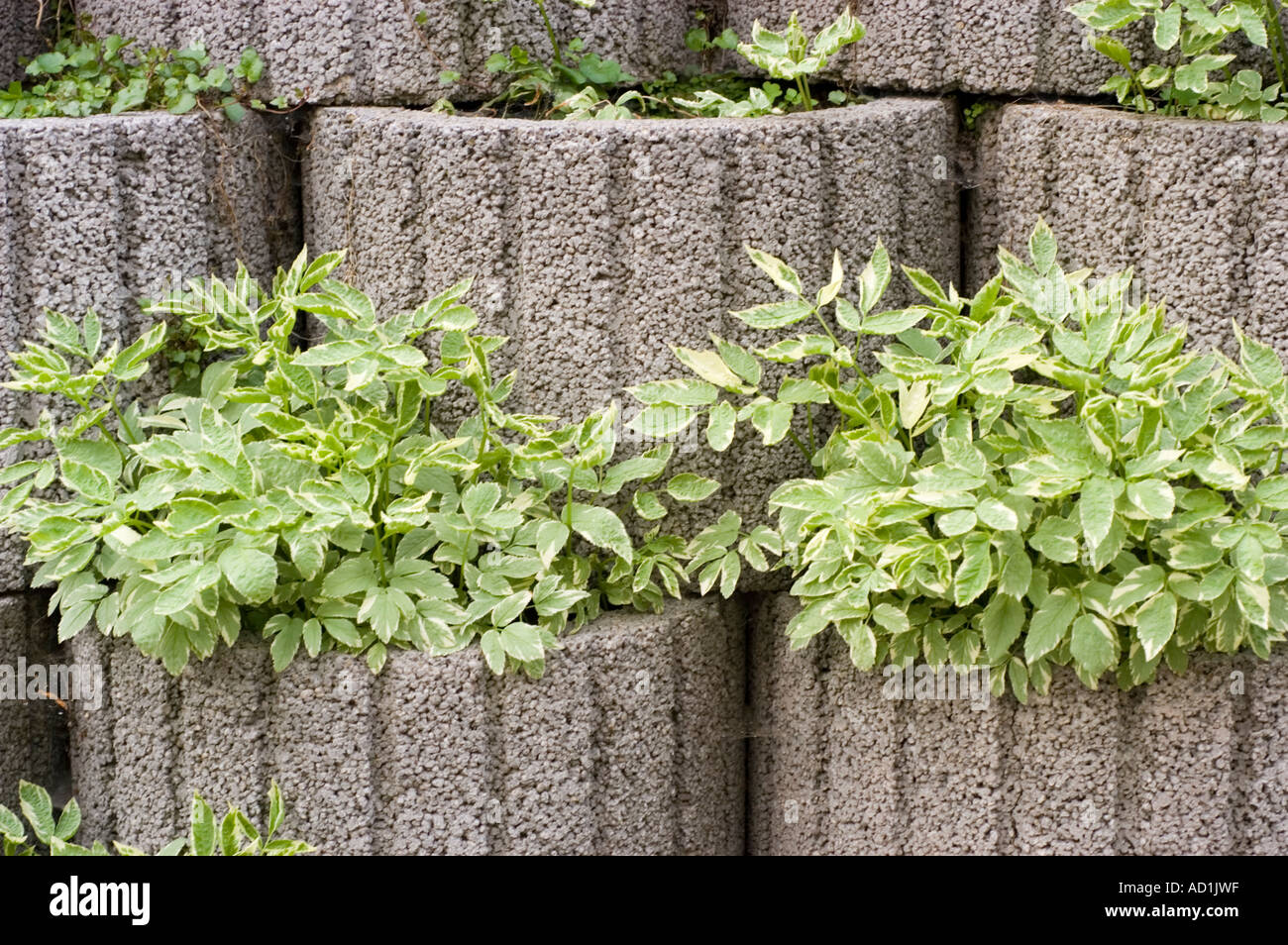 wall of concrete pots with green plants for decorating outside