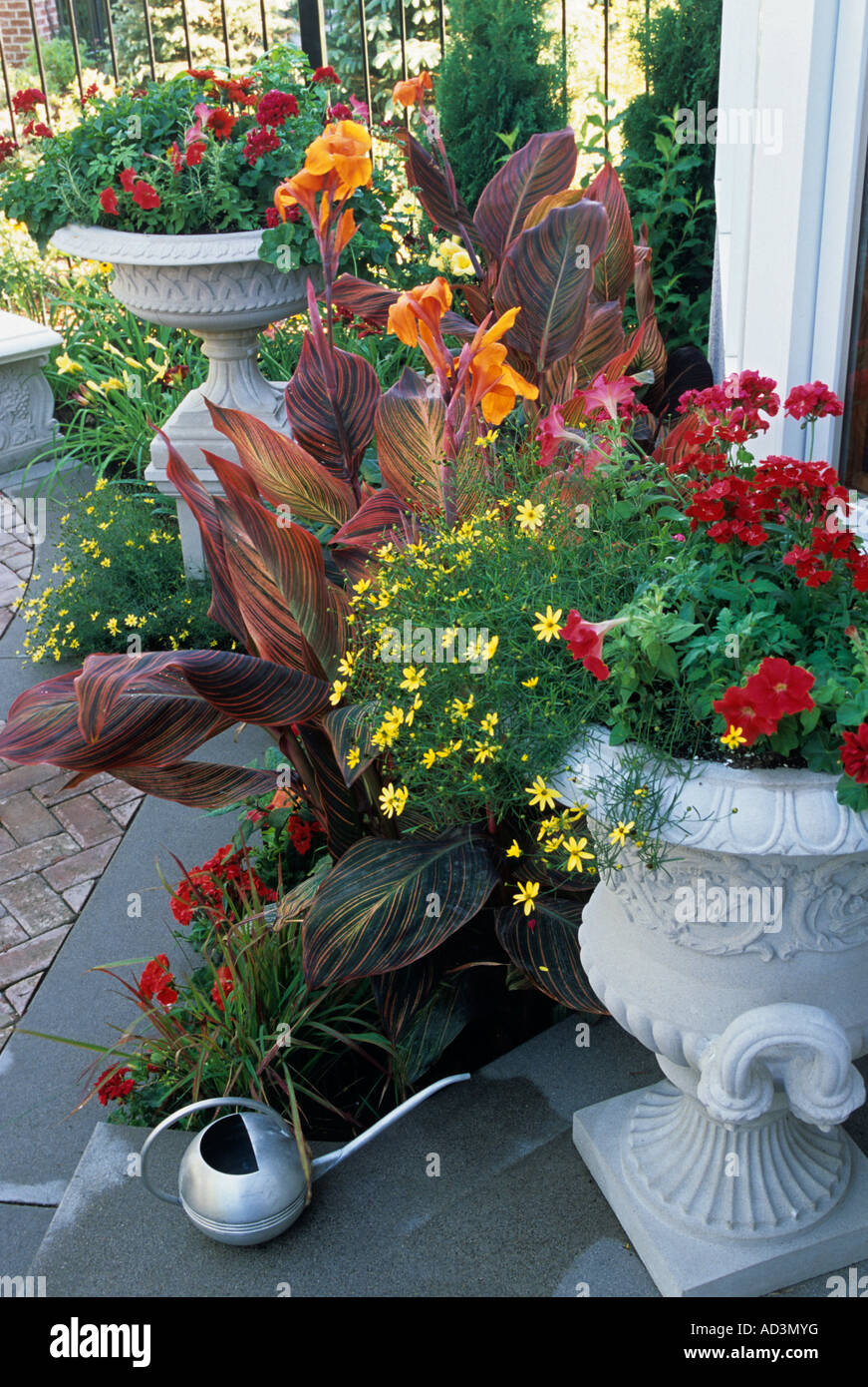 MINNESOTA TOWNHOME PATIO GARDEN WITH STONE PLINTHS AND URNS, TROPICANNA  CANNAS, MOONBEAM COREOPSIS. JULY