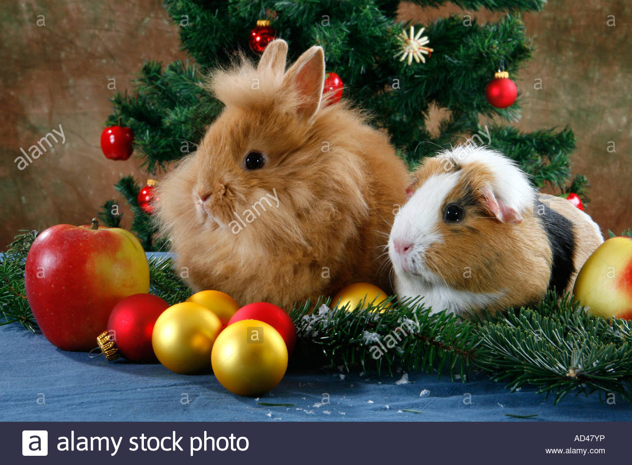 Pet Rabbit and Guinea Pig at Christmas time under the christmas ...
