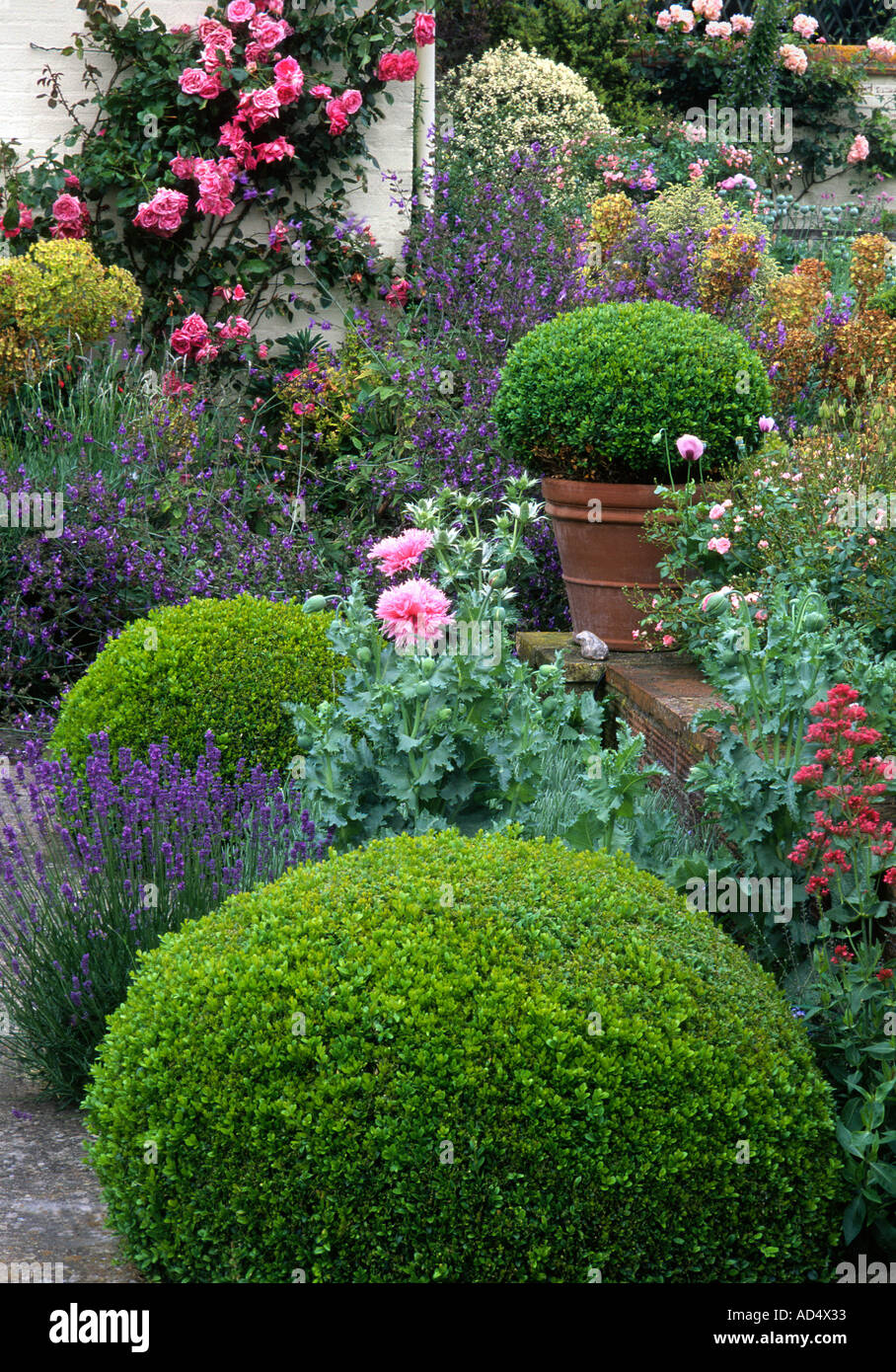 Garden Design Hedges kettle hill, box hedges norfolk england english garden design