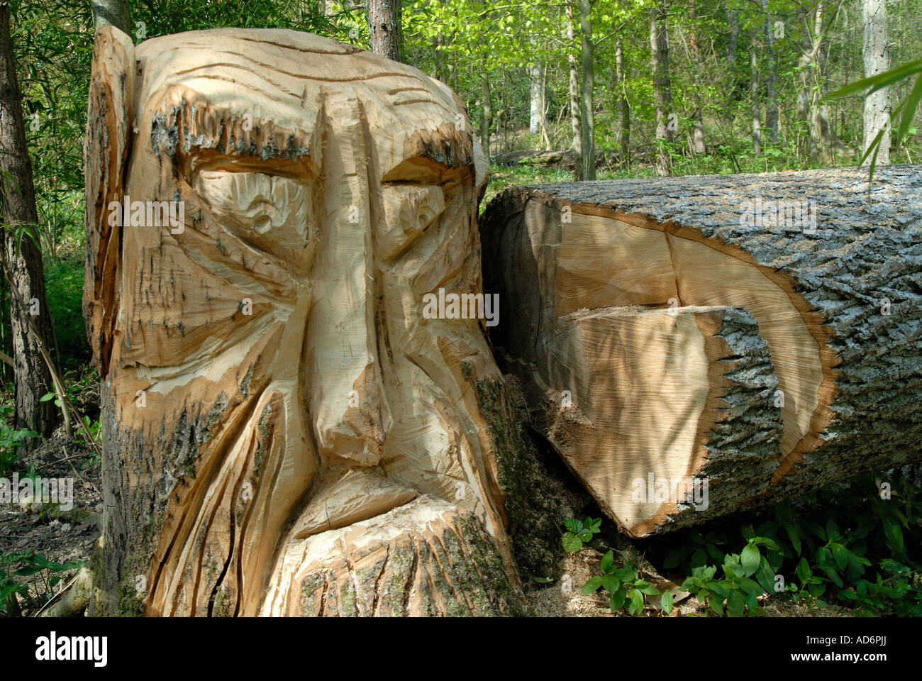 A carved tree trunk in the enchanted forest groombridge