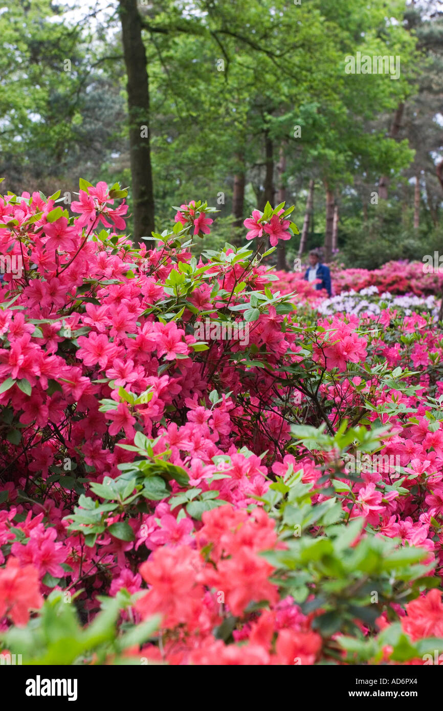 rhododendron park in bremen germany may 2006 stock photo royalty free image 7613219 alamy. Black Bedroom Furniture Sets. Home Design Ideas