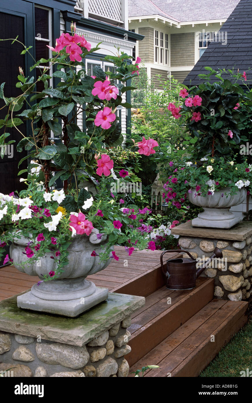 Back porch of minneapolis minnesota home with pots of mandevilla stock photo royalty free - Growing petunias pots balconies porches ...