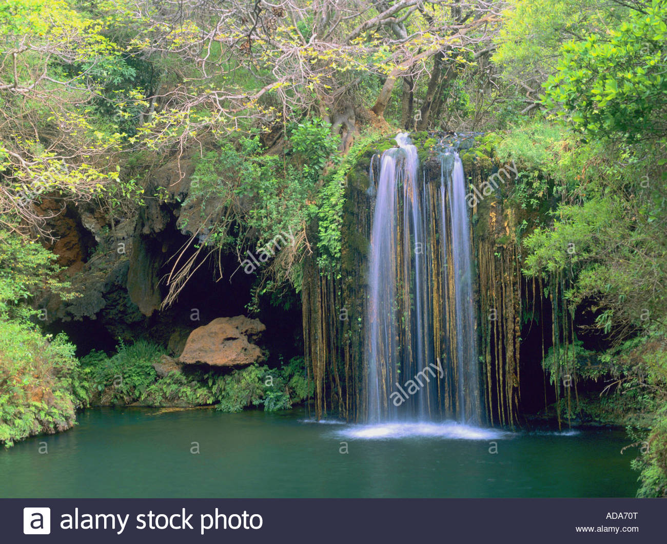 rainforest in south africa images
