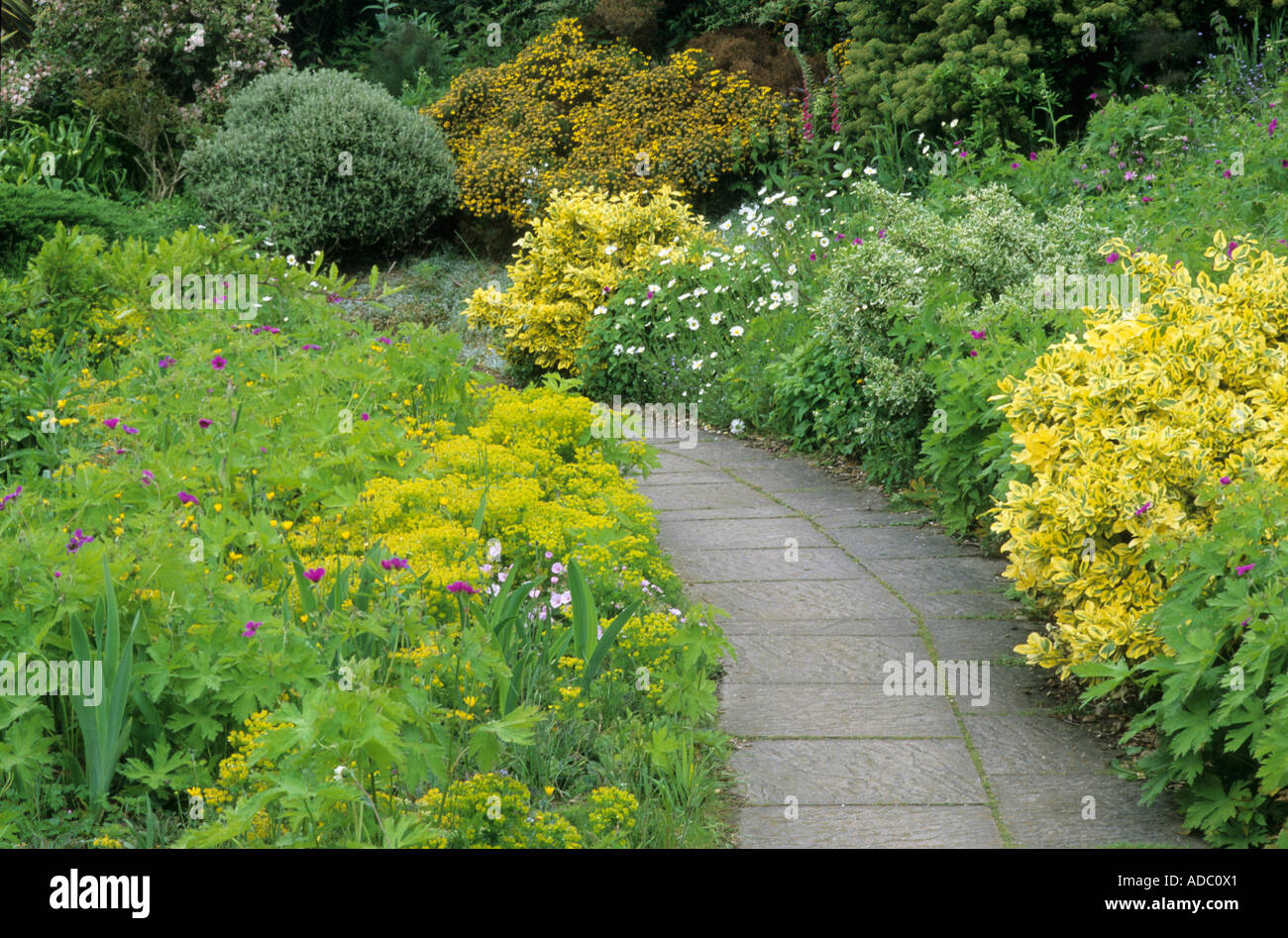 Garden Path yellow planting Euphorbia and Euonymus geranium