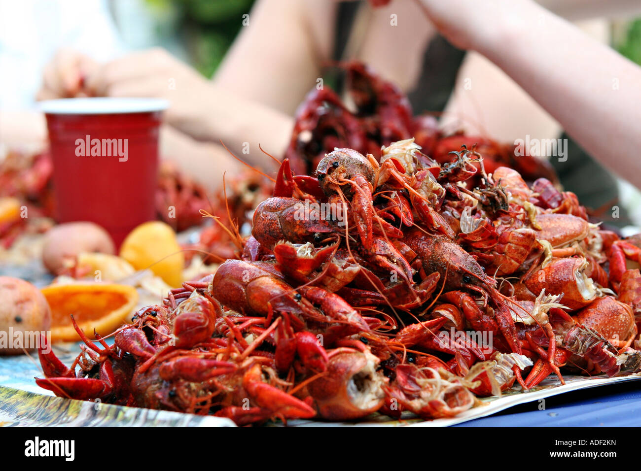 A Pile Of Half Eaten Crawfish At A Backyard Crawfish Boil Stock Image  Learn How To Eat