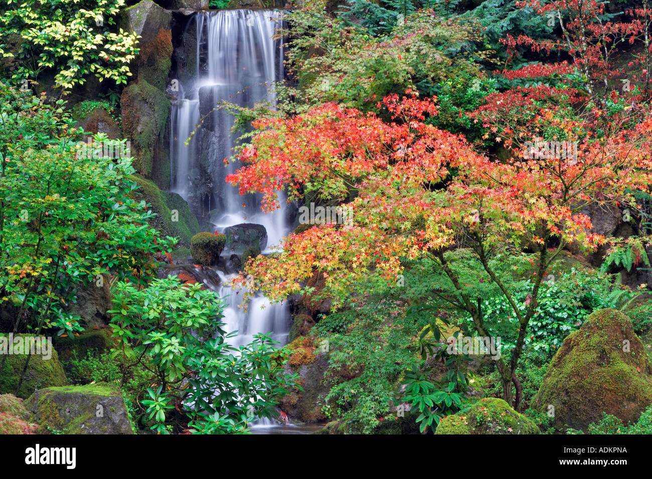 Fall color with waterfall in japanese gardens portland for Japanese garden colors