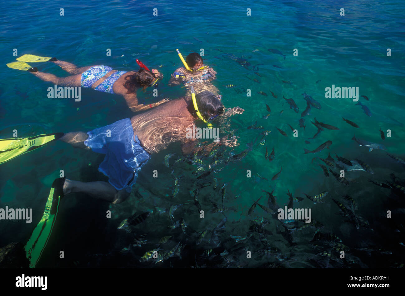 Family Snorkling In Yakul Lagoon Akumal Mexico Mayan Riviera Stock Photo, Royalty Free Image ...