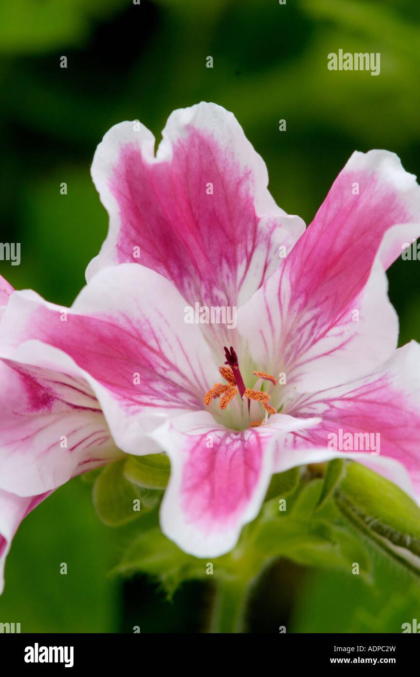 flower dsiplay at duthie park winter gardens aberdeen stock photo