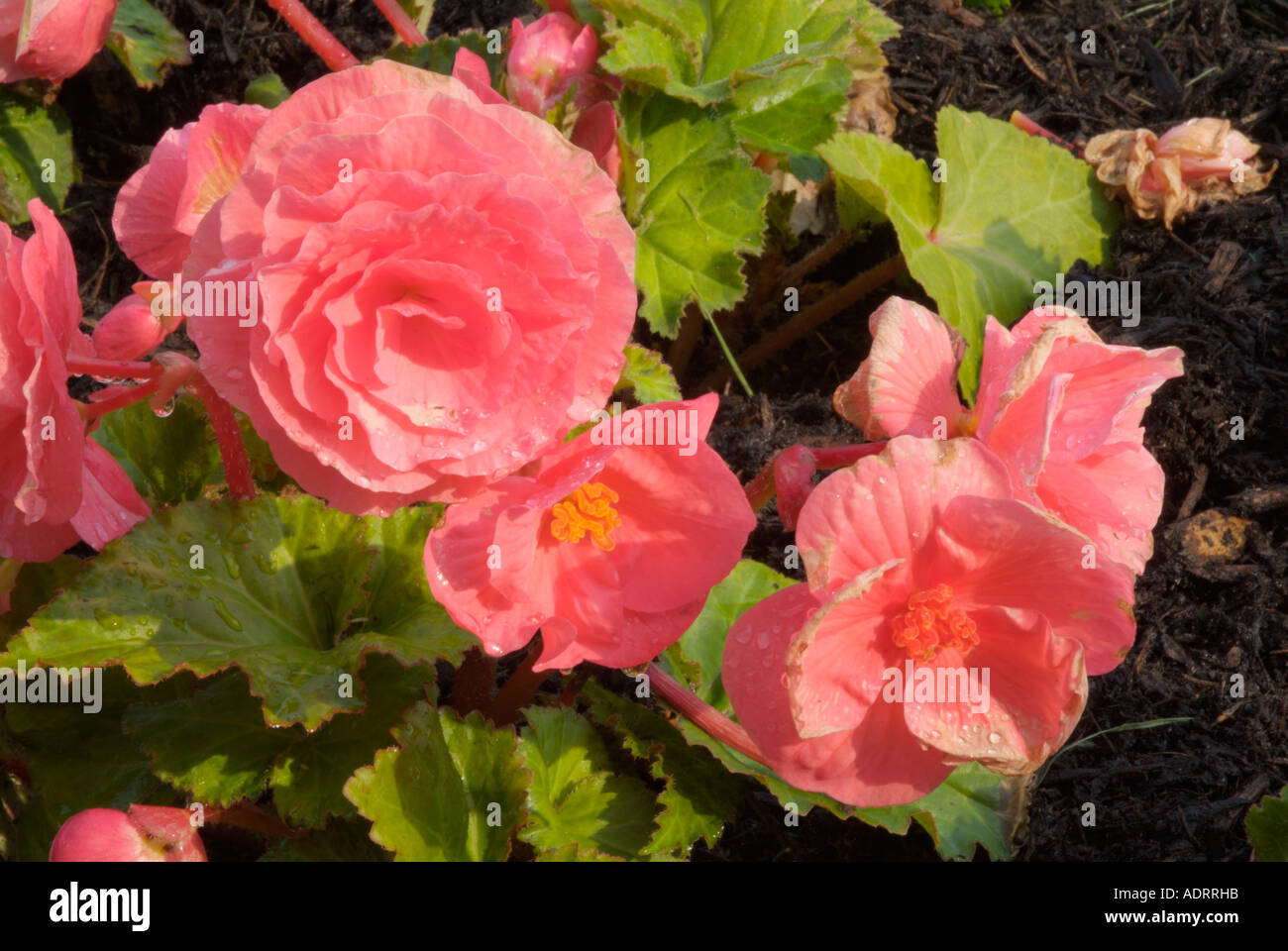 Plants for spring and summer - Stock Photo Flowers Bloom Pretty Pedals Gardens Garden Grow Summer Spring Colors Plant Plants Environment Elegant Natural