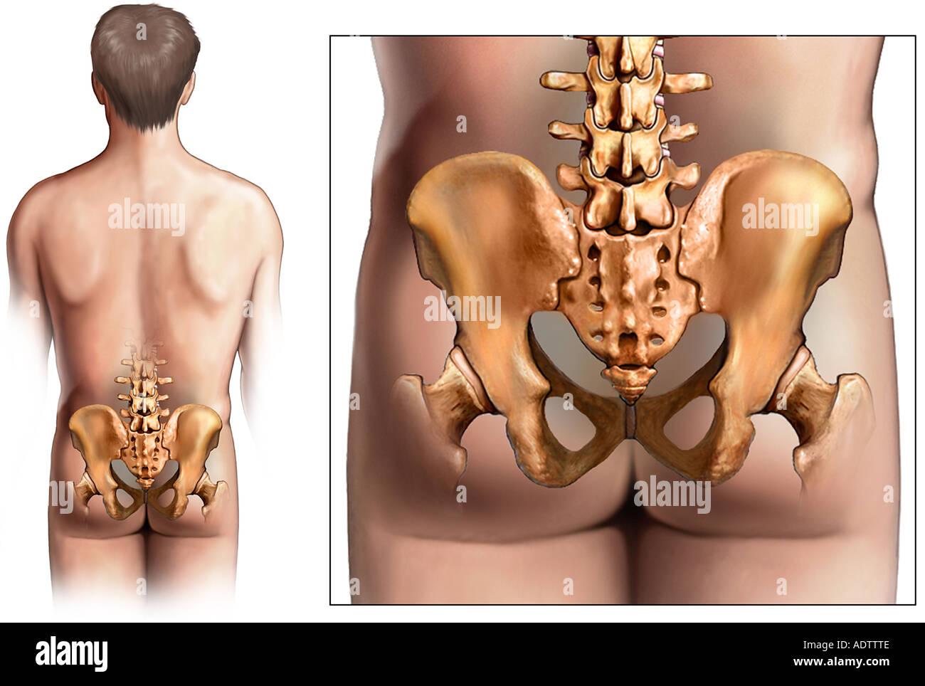 anatomy of hip choice image - learn human anatomy image, Skeleton