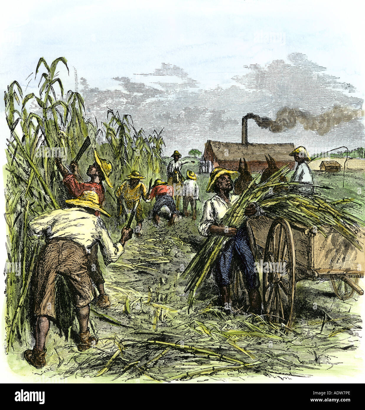 a summary of sugar plantations Interesting facts about the sugar act sugar and molasses act of 1733 the purpose of this act was to protect its sugar plantations from the more fertile lands of the.
