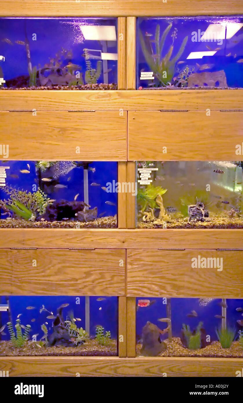 Fish aquarium utah - A Tropical Fish Display Stacked Three 3 High In A Pet Store In Utah Usa
