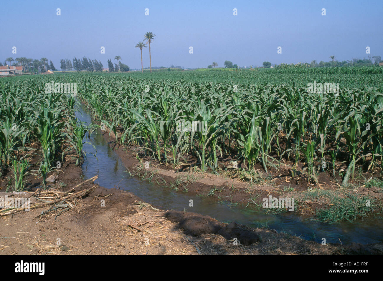 Egypt North Africa Middle East Nile River Delta Irrigation Channel