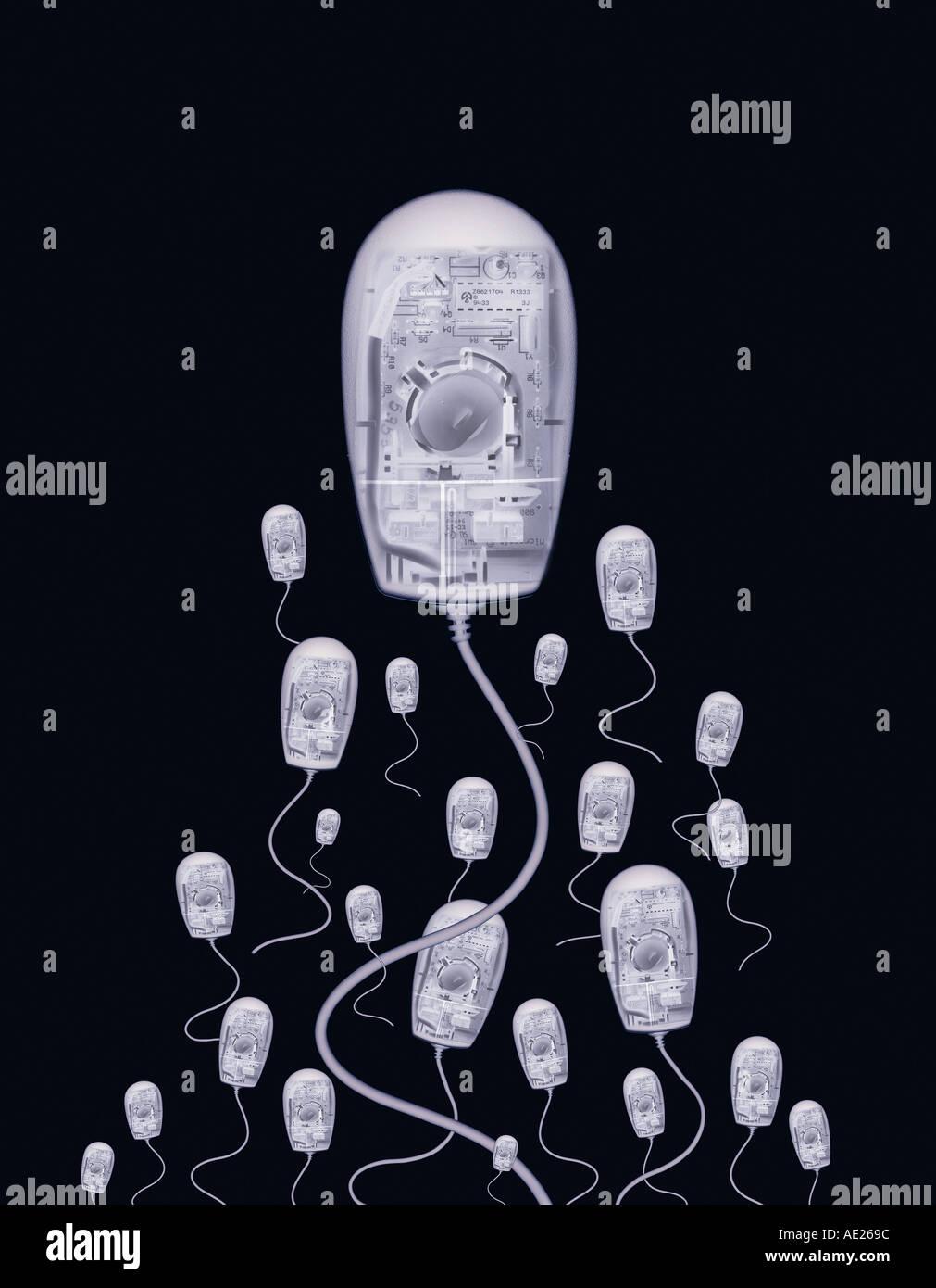Xray effect on sperm