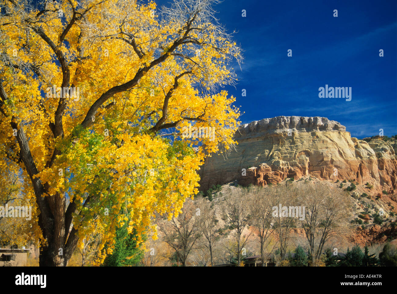 New mexico rio arriba county abiquiu - Cottonwood Rio Arriba County New Mexico United States Of America North America