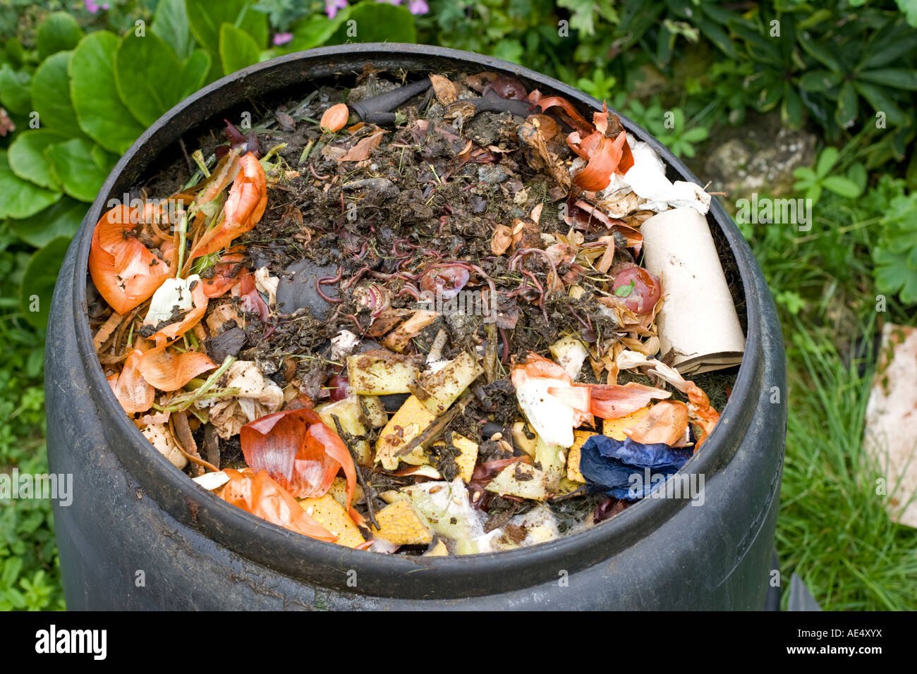 worms visible in kitchen waste in top of black plastic