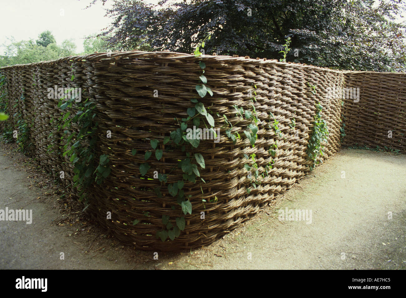 Woven fencing stock photos woven fencing stock images alamy curved continuous willow fencing made on site by crawford balsch from debenham suffolk stock image baanklon Images