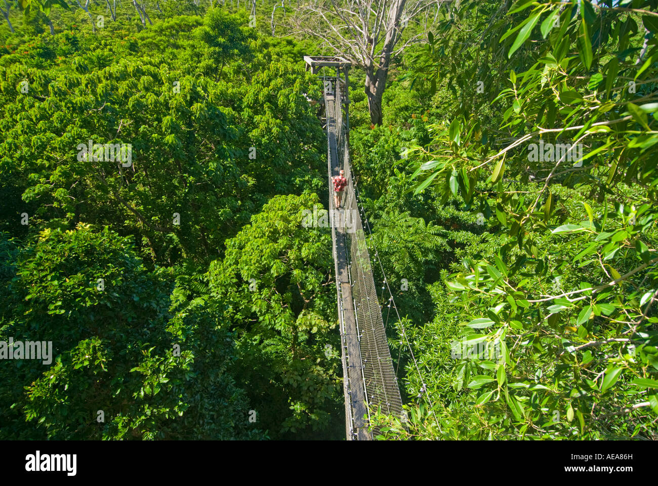 Falealupo Rainforest Preserve SAMOA Savaii forest canopy walkway over suspension bridge hanging man red shirt & Falealupo Rainforest Preserve SAMOA Savaii forest canopy walkway ...