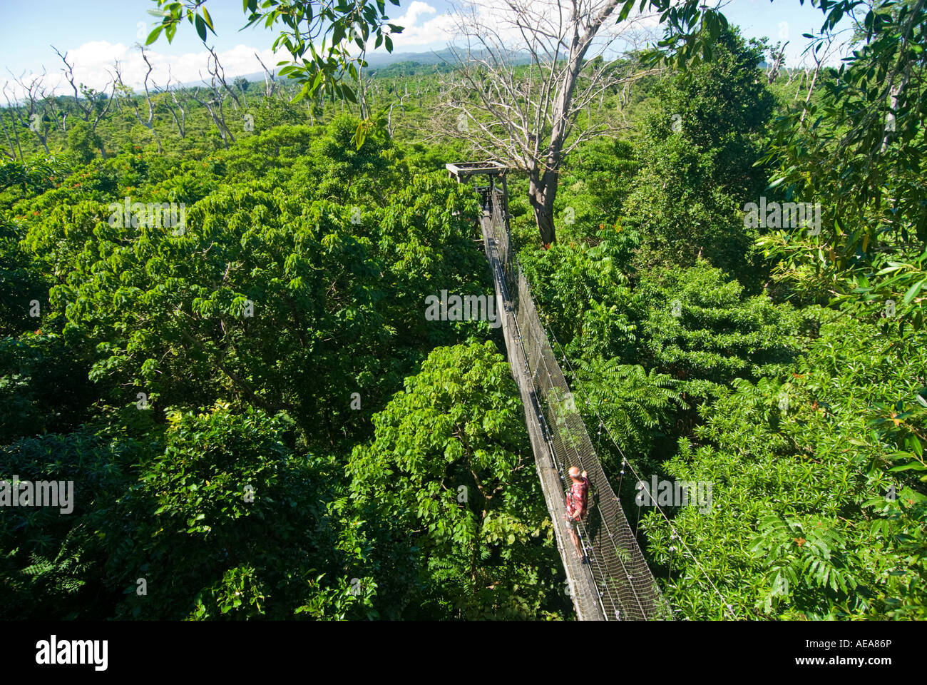 Falealupo Rainforest Preserve SAMOA Savaii forest canopy walkway over suspension bridge hanging man red shirt : canopy walkway samoa - memphite.com