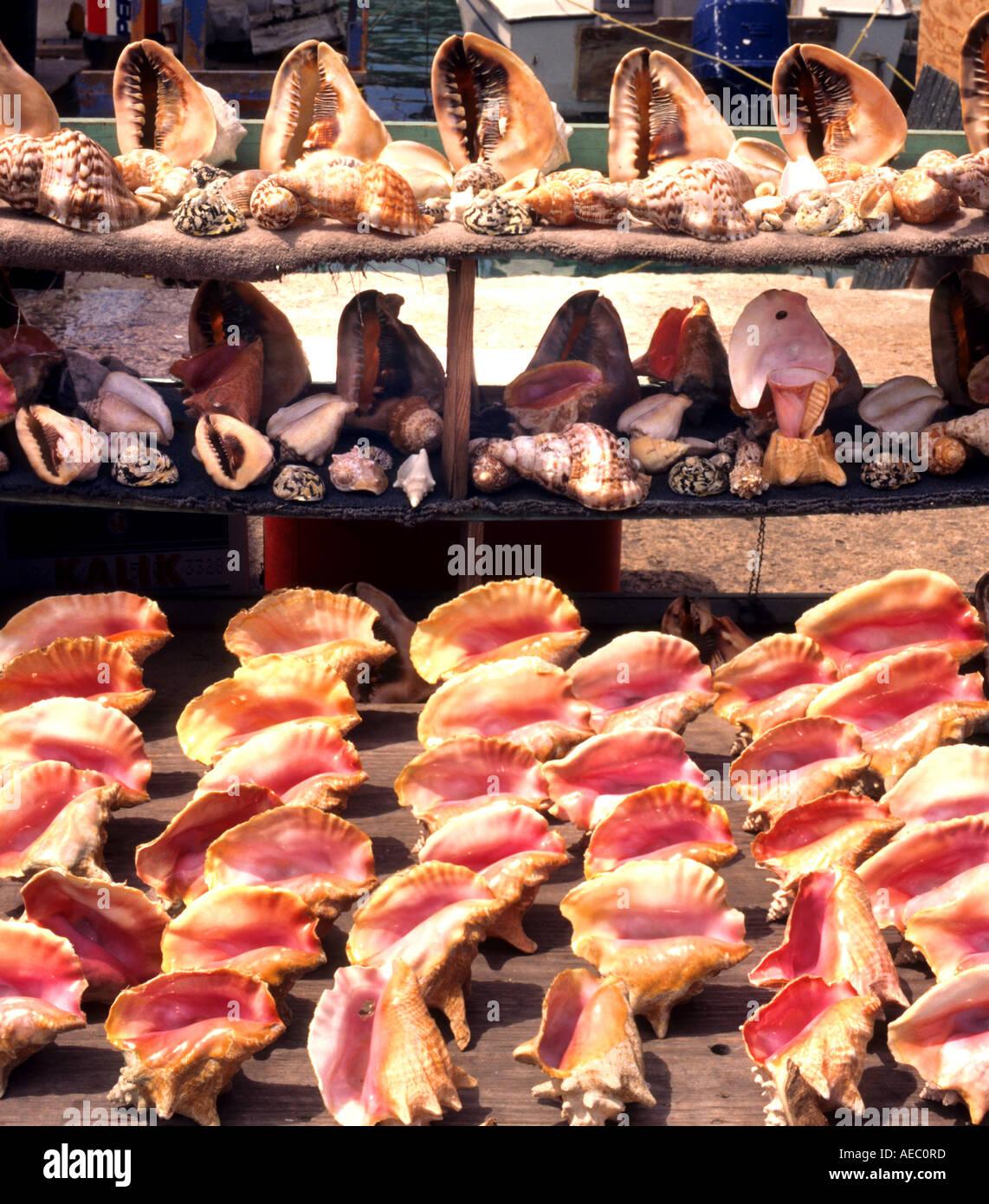 Nassau bahama bahamas fish conch market stock photo for Bahamas fish market