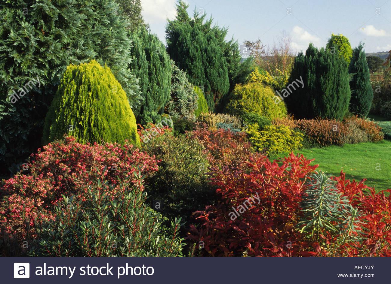 broadlands dorset low maintenance conifers and shrubs in autumn
