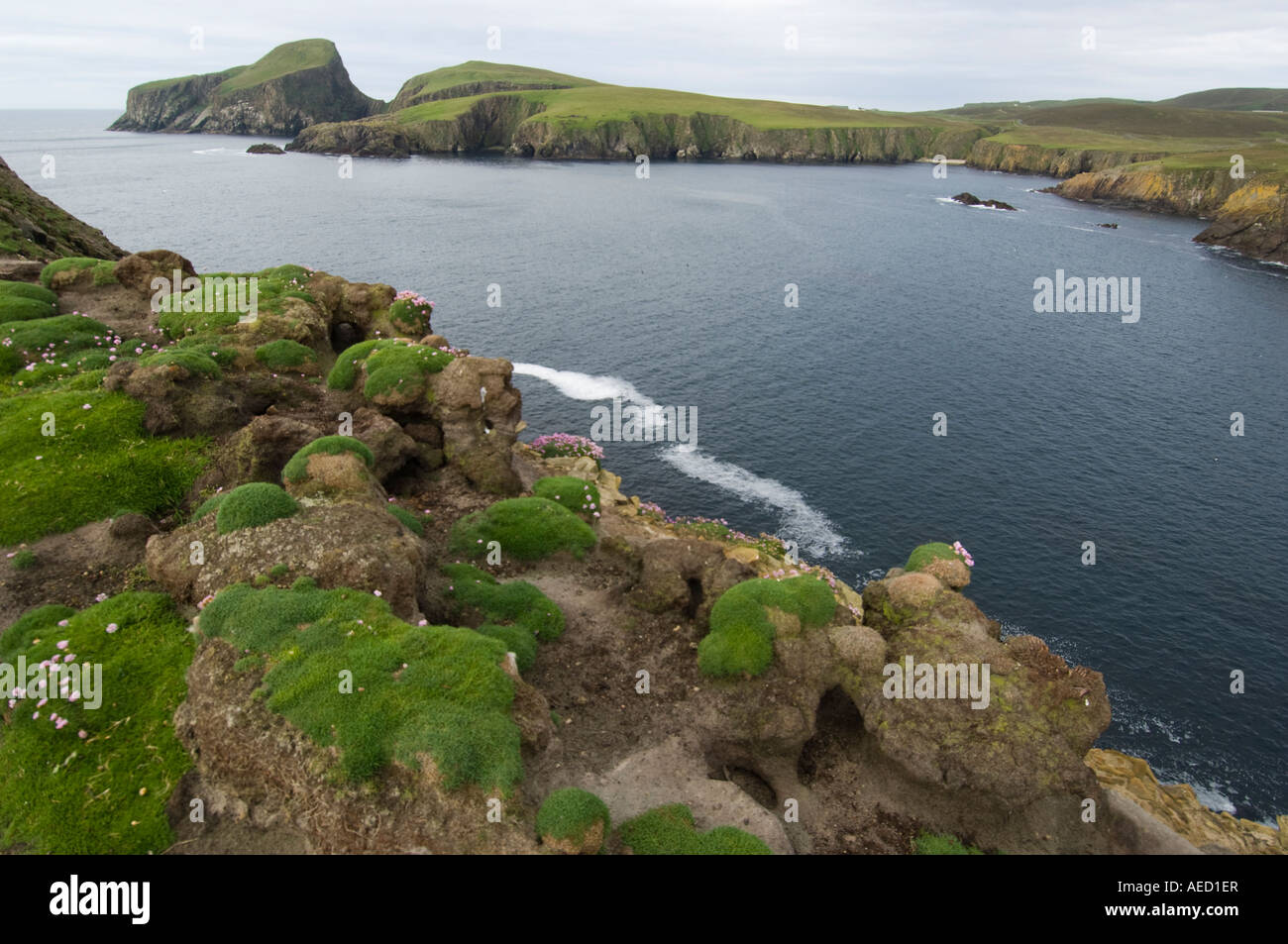 Landscape of Fair isle (Shetland, UK) with Puffin nests Stock ...