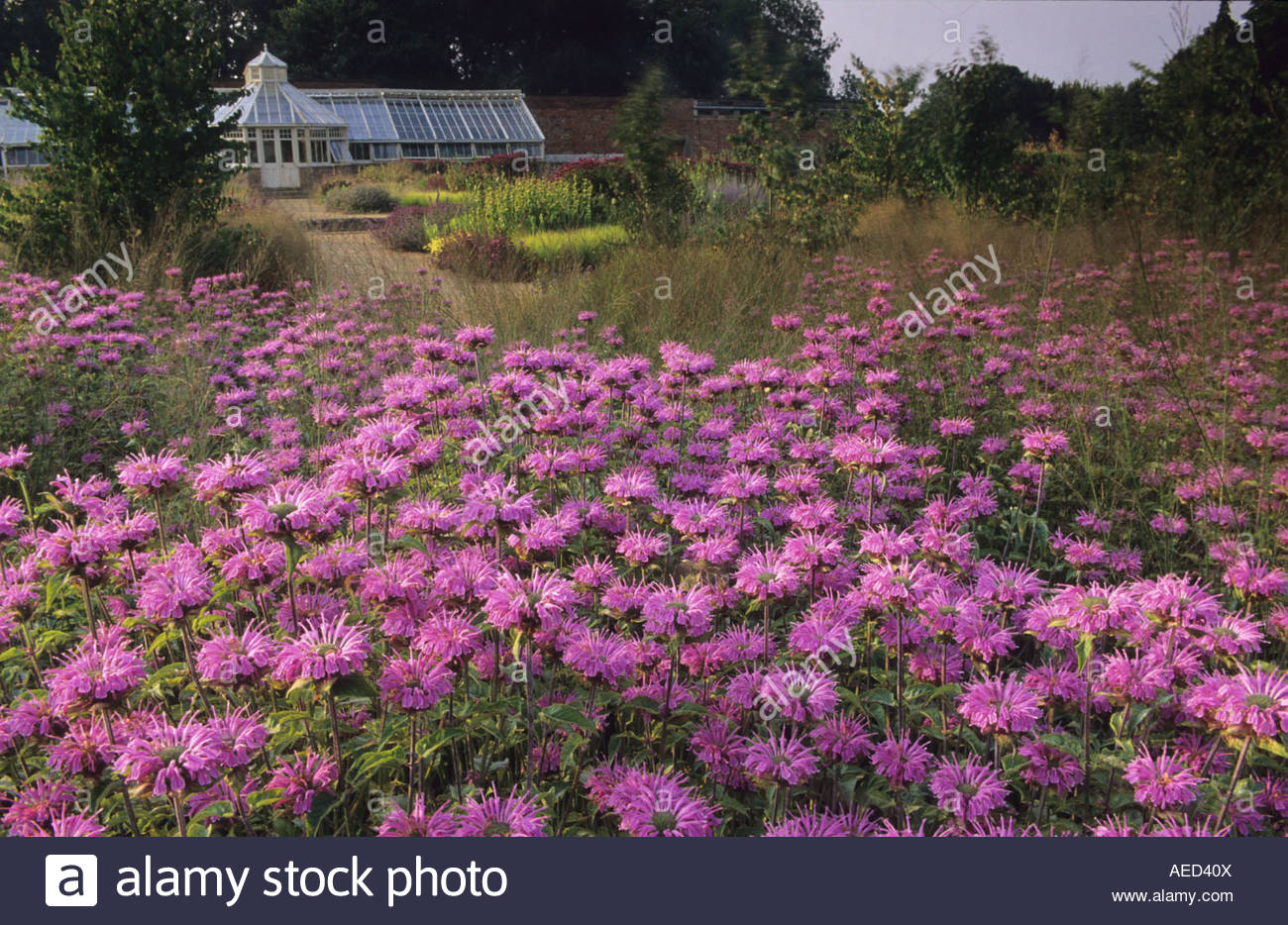 Scampston hall yorkshire design piet oudolf bee balm for Piet oudolf fall winter spring summer fall