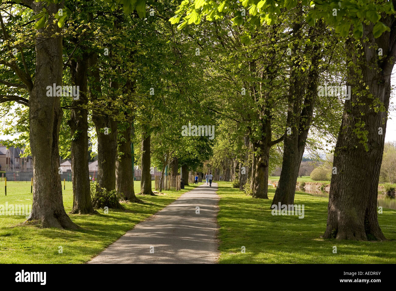 Awesome Stock Photo Uk Wales Powys Builth Wells The Groe Beside River Wye  Abrams Folly Row Of Trees With Groe