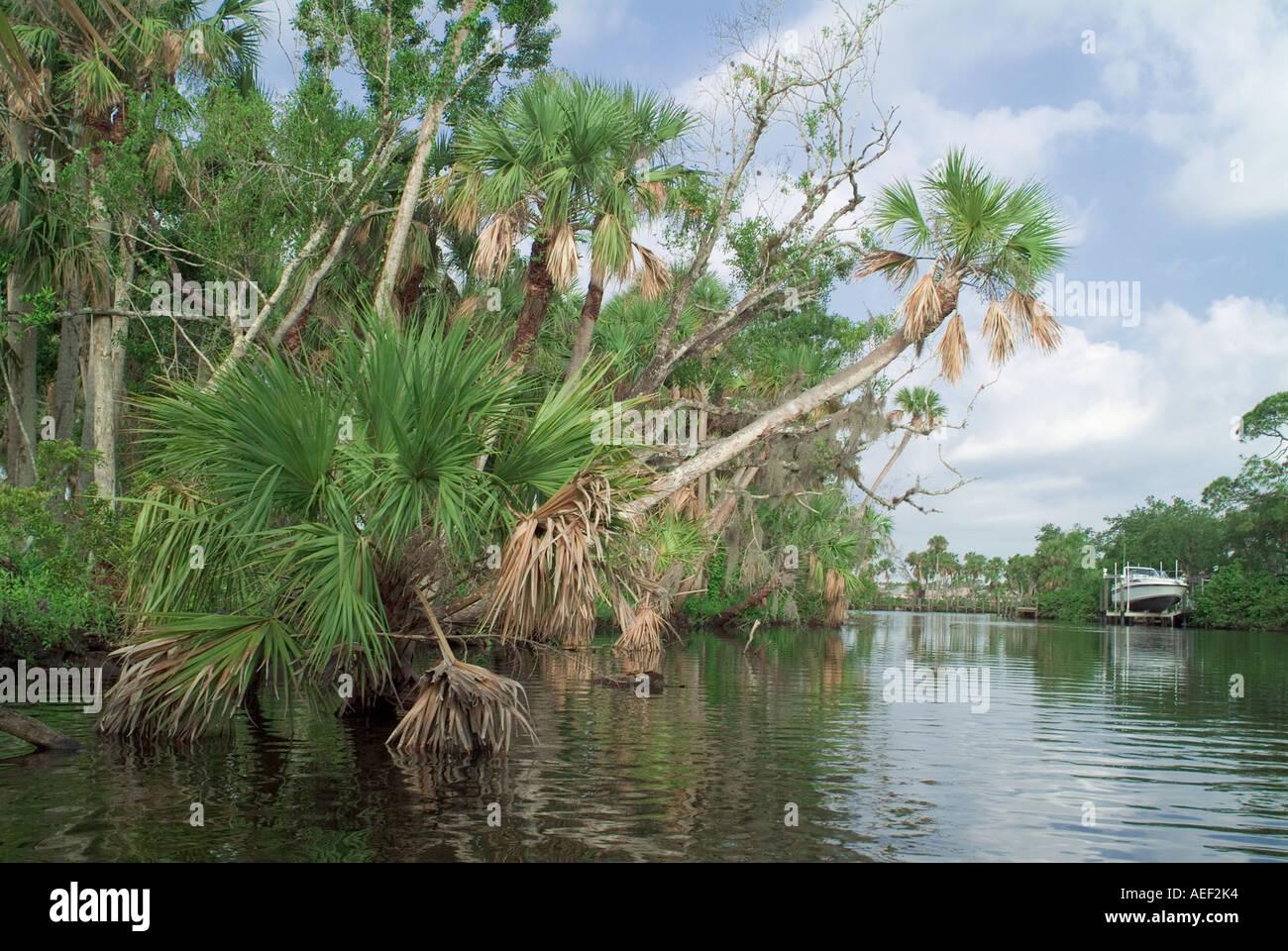 Landscapes along the south bank - South Fork Saint Lucie River Palm Trees Along River Bank Stuart Martin County Fl Tropical