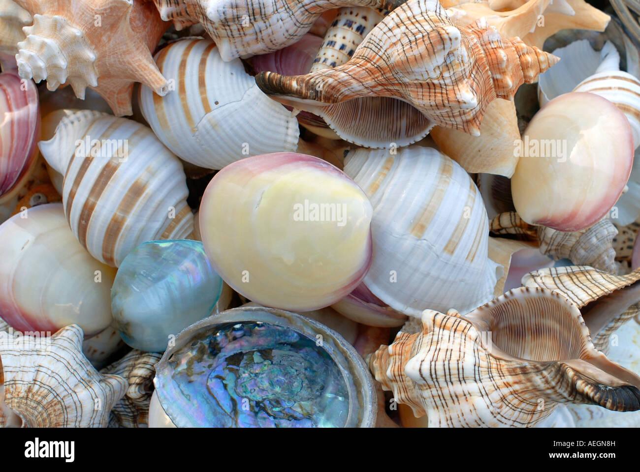 assorted seashells up stock photo 13680112 alamy