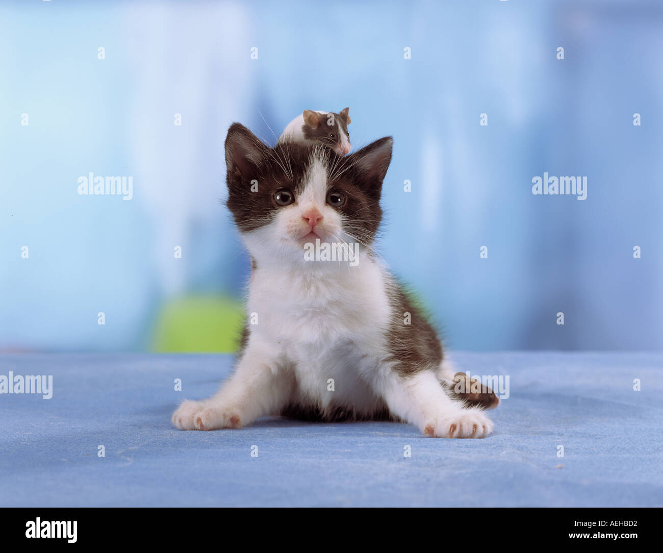 animal-friendship-kitten-with-a-mouse-on
