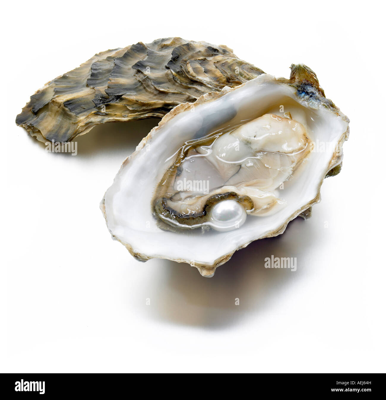 Open oyster and pearl Stock Photo, Royalty Free Image ...