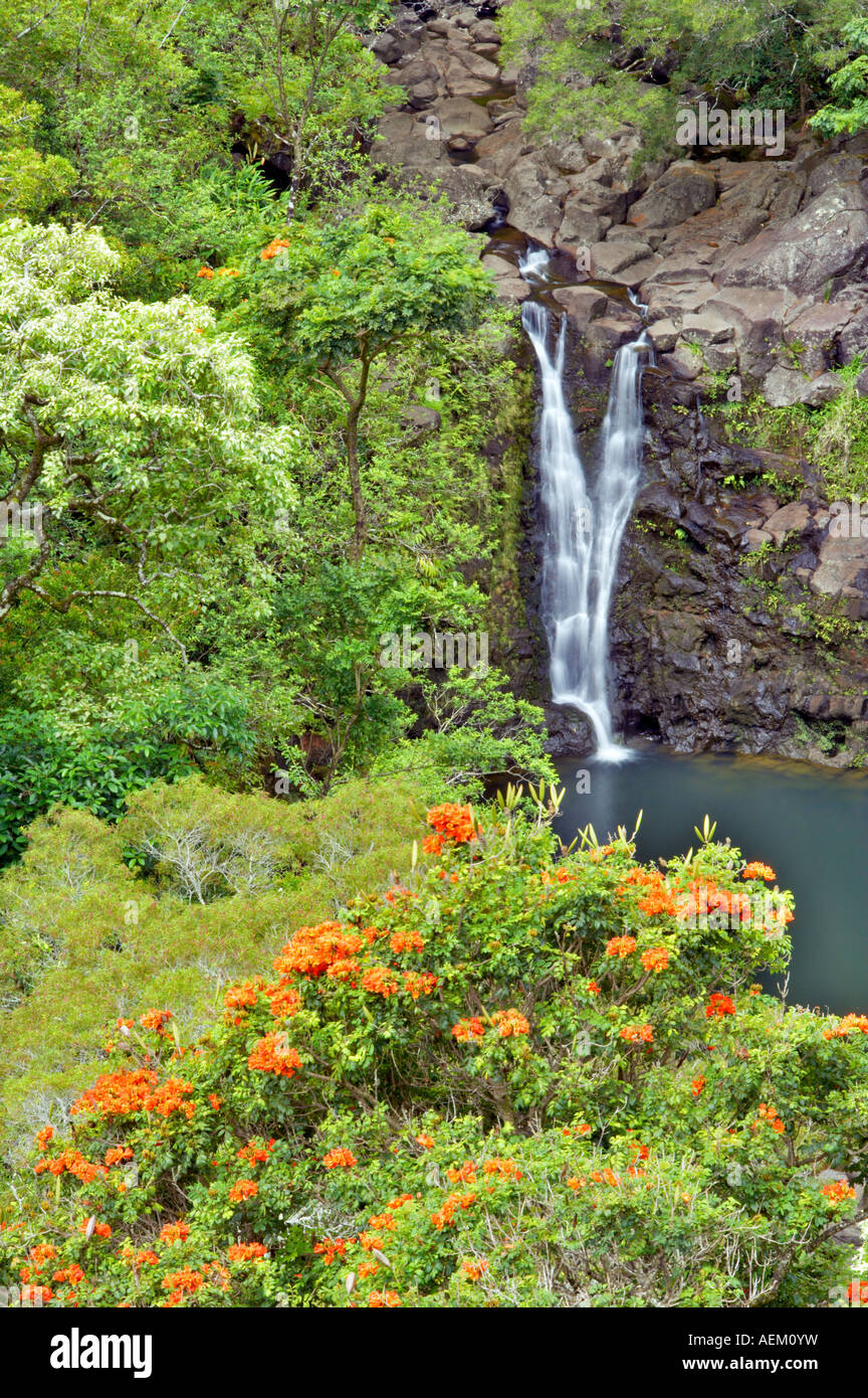 Puohokamoa falls pool garden of eden botanical gardens for Garden pool dennis mcclung