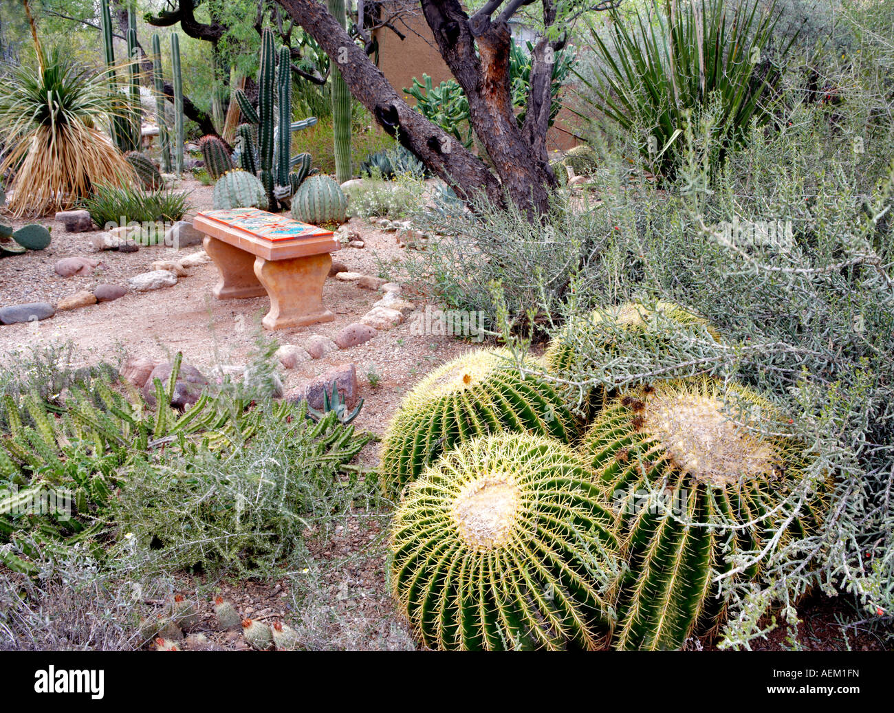Cactus Garden With Bench In Tucson Botanical Gardens Tucson Arizona
