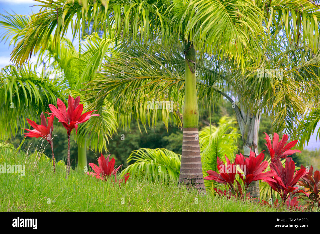 Palm Tree Garden - Home Design Ideas and Pictures