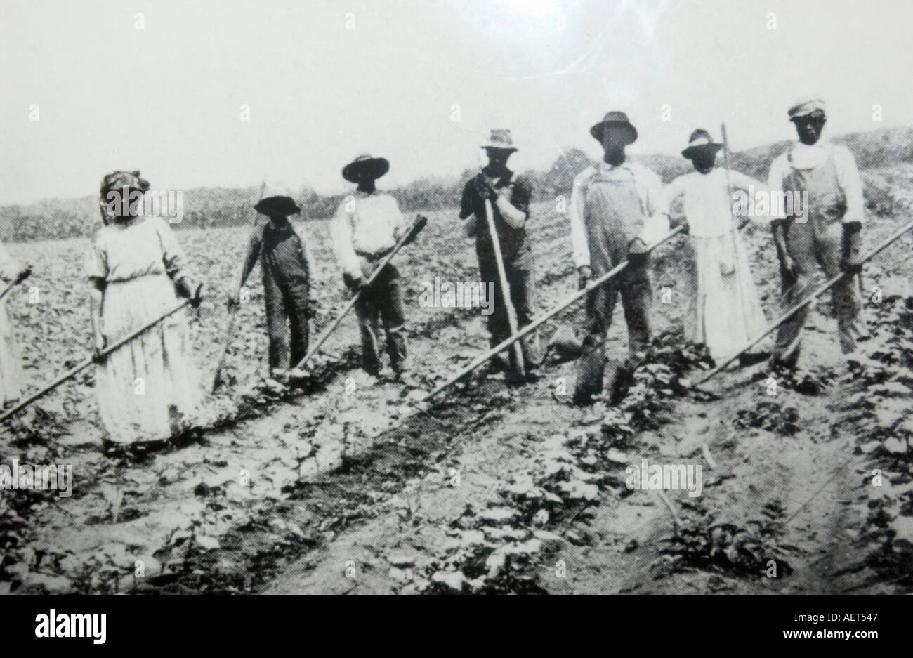Photo Of Black Share Croppers At South Carolina Cotton Museum In - Black museums in usa