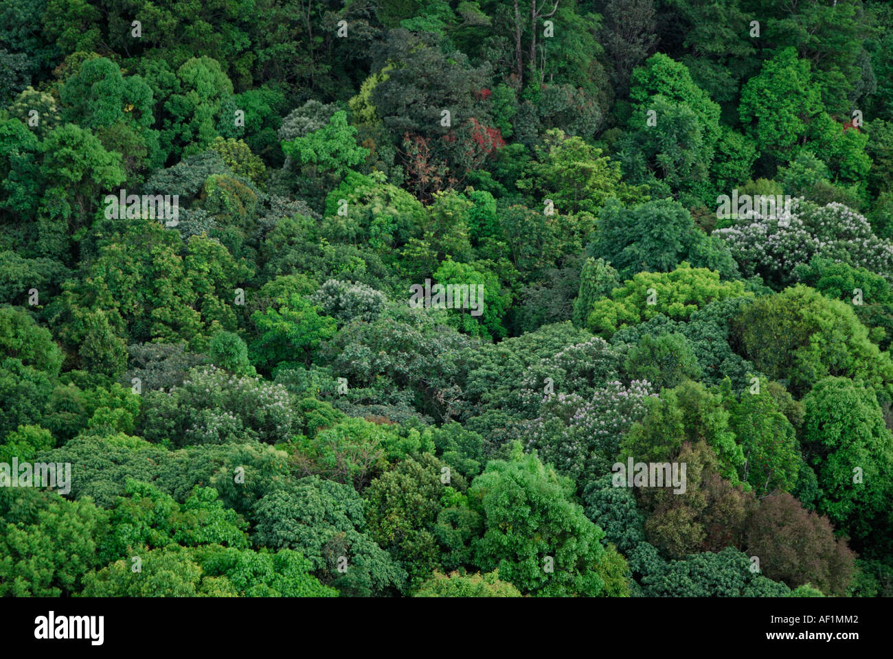 EVERGREEN FOREST CANOPY SILENT VALLEY NATIONAL PARK & EVERGREEN FOREST CANOPY SILENT VALLEY NATIONAL PARK Stock Photo ...