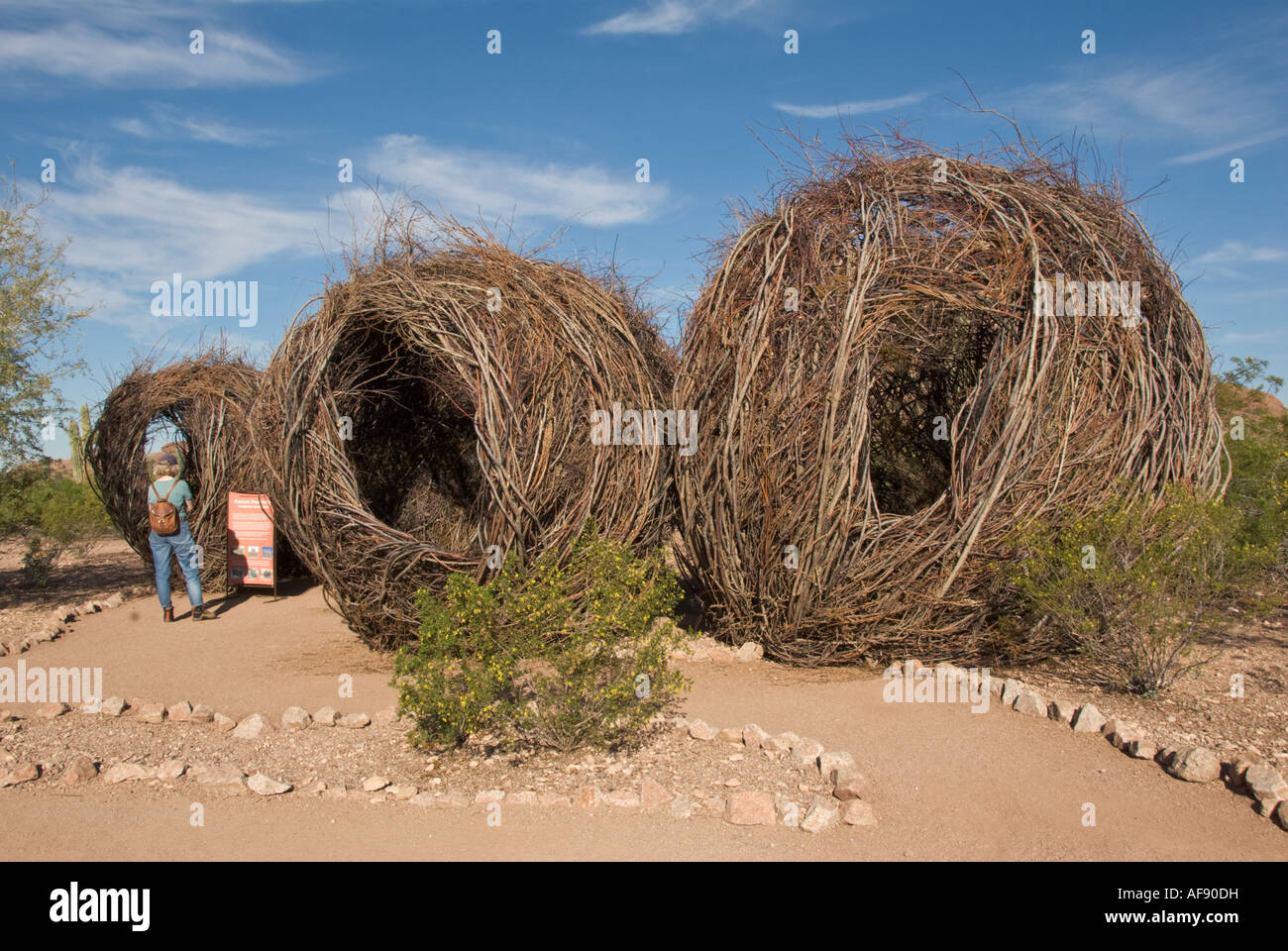 Arizona Phoenix Desert Botanical Garden Patrick Dougherty Environmental  Sculpture Installation Made Entirely Out Of Saplings MR