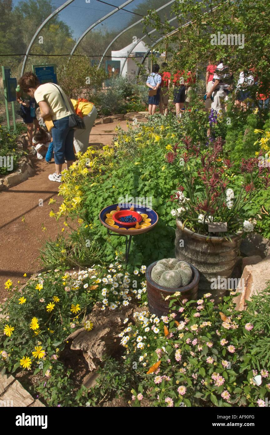Arizona phoenix desert botanical garden butterfly garden for Phoenix butterfly garden