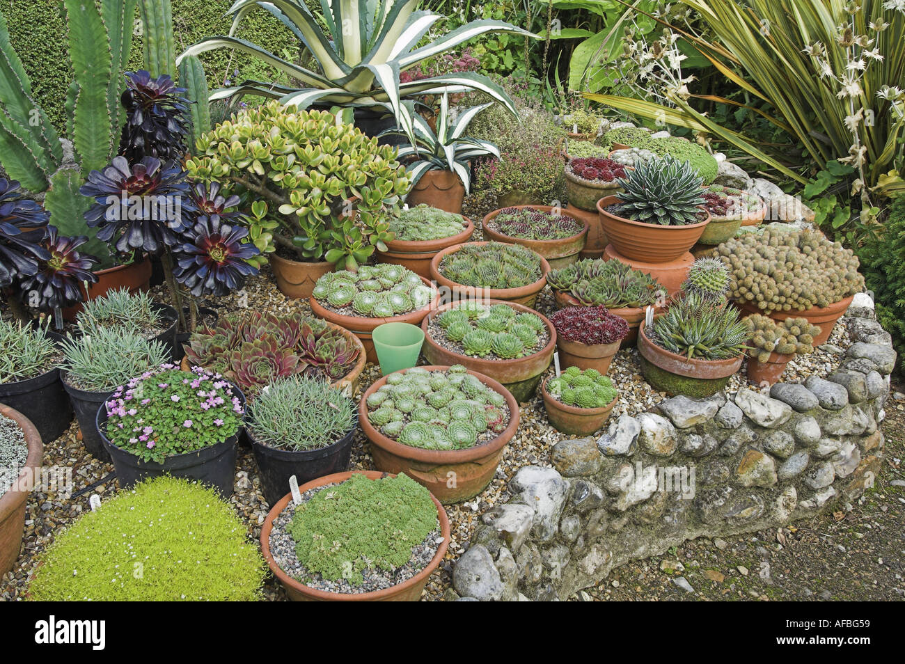 Sempervivums Succulents Planted In Pots On Raised Planting